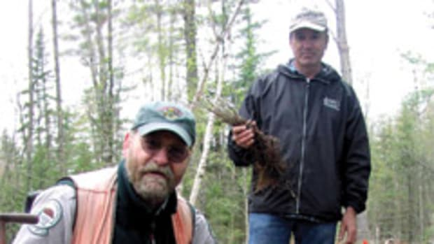 Planting seedlings at a Piscataquis County, Maine, project directed by the Hardwood Forestry Fund.