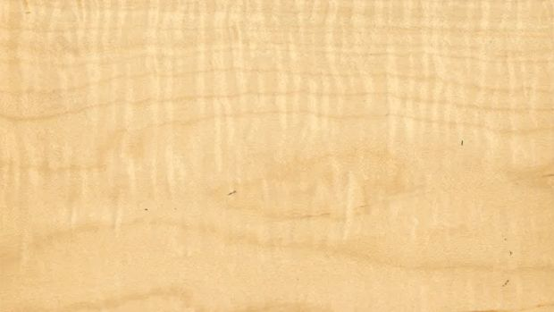 curly-maple