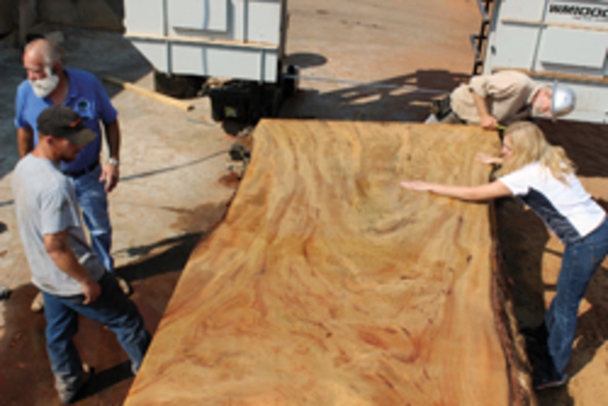 Far West Forest Products milled this slab from a camphor tree that grew in Sacramento, Calif.